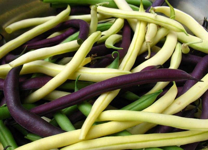 Фасоль овощная — выращивание, посадка, размножение и уход