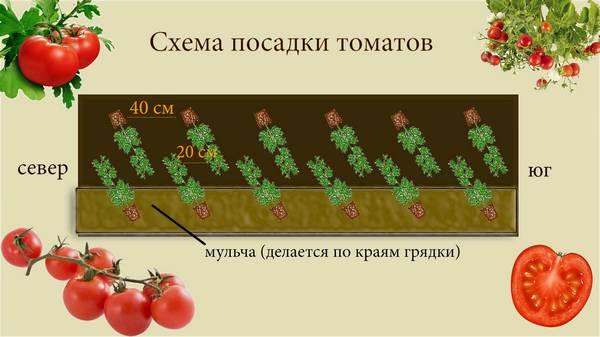 Как правильно ухаживать за помидорами в теплице из поликарбоната?