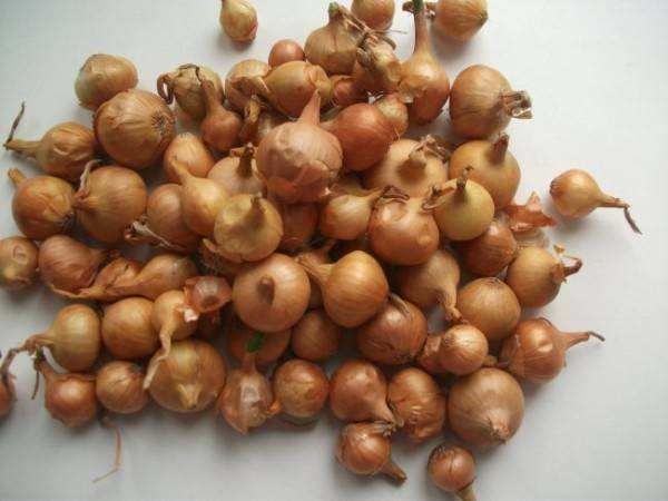 Как сохранить лук до весны свежим и съедобным