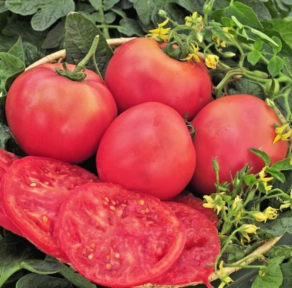 Описание сорта томата розовый гигант