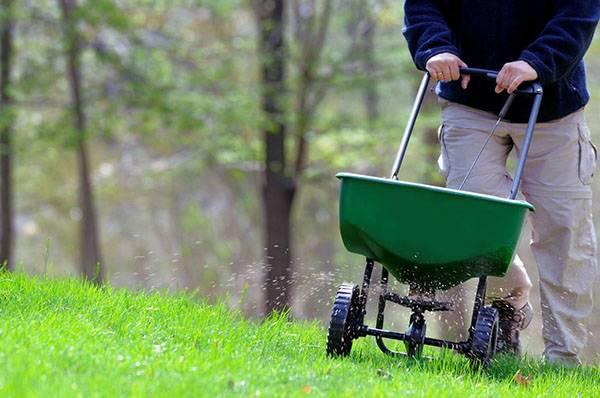 Удобрение для газона: особенности подкормок и выбор средств