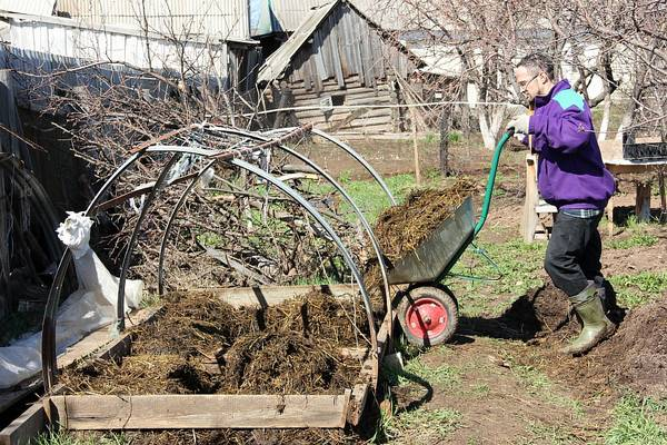Выращивание и подкормка огурцов